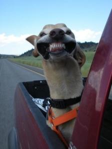 wind smile