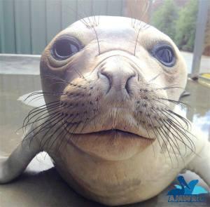 closeup seal