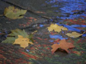 fall-leaves-wet-rock