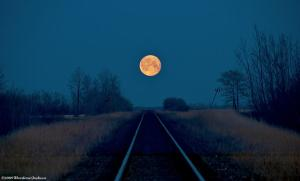 moonlit tracks