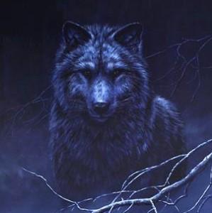 wolf_stare