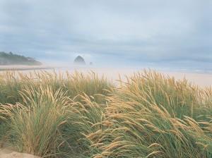beach_grass