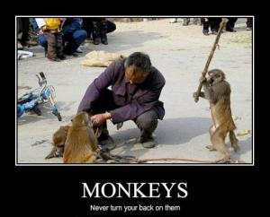 never-turn-your-back-on-monkeys