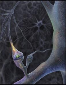 neurons9