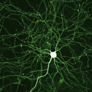 Synapses-Provide-2