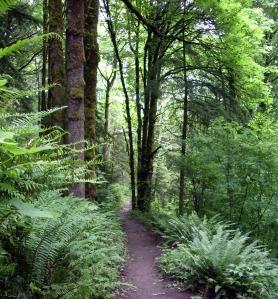 Forest_park_portland