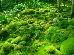 moss mountain