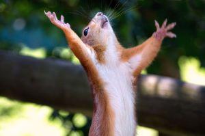squirrel exulting
