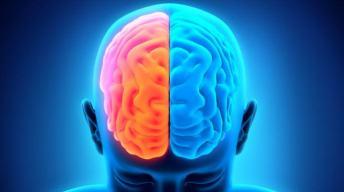 Left-Brain-vs-Right-Brain